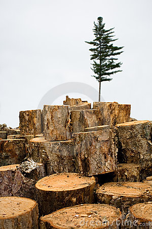 Deforestation. Ecology. Fir.