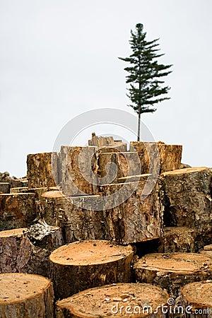 Deforestation. Ecology. Fir.