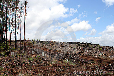Deforestation in Tasmania, Australia