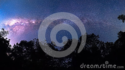 180degree Milky Way cross over forrest, national park THAIALND