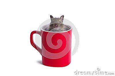 Degu in a Mug