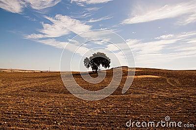 Dehesa en Extremadura