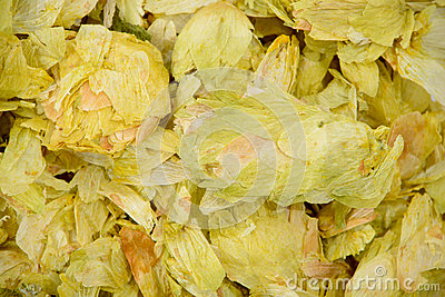 Dehydrated Hops