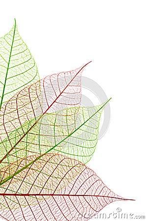 Dekorative Blätter