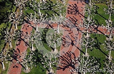 Berkeley-Baum-Ansicht B1a