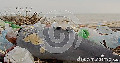 Delfín joven muerto en la orilla del mar Problema de contaminación ambiental por basura plástica, catástrofe ecológica almacen de video