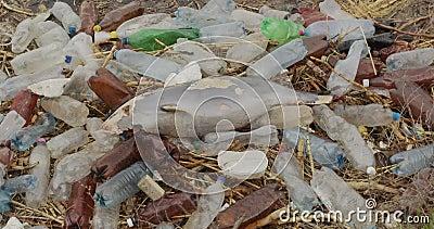 Delfín joven muerto en la orilla del mar Problema de contaminación ambiental por basura plástica, catástrofe ecológica metrajes
