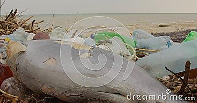 Delfín joven muerto en la orilla del mar Problema de contaminación ambiental por basura plástica, catástrofe ecológica almacen de metraje de vídeo