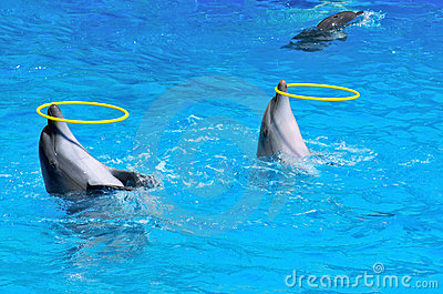Delfiny bawić się pierścionki dwa