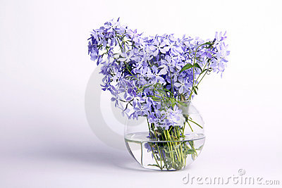 Delicate blue flowers
