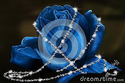 Delicate Blue Rose