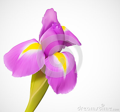 Delicate exotic  flower