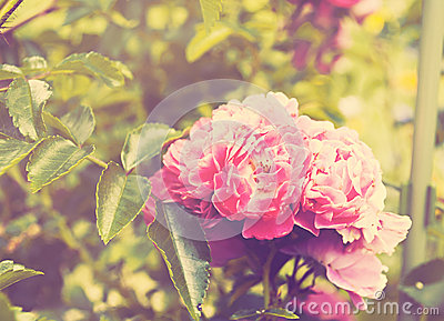 Delicate pink floral background