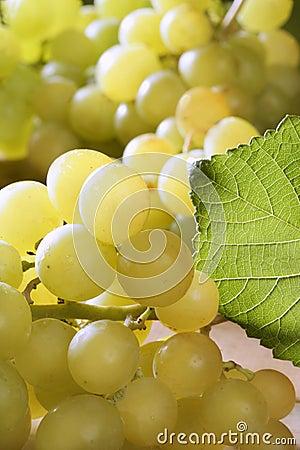 Delicious yellow autumn grape fruit