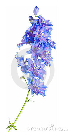 Free Delphinium Stock Photos - 5567283