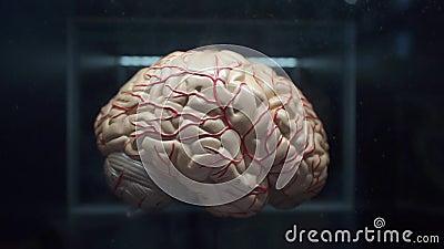 Demonstração plástica do cérebro humano filme