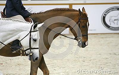 Demostración 2007 del caballo Fotografía editorial