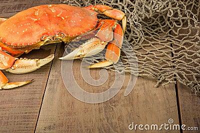 Den Dungeness krabban ordnar till för att laga mat