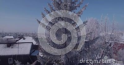 Den flyg- sikten av vit frost på ett djupfryst träd överträffar i bygd flyg över treetopen 4K lager videofilmer