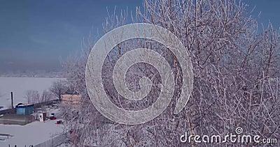Den flyg- sikten av vit frost på ett djupfryst träd överträffar i bygd flyg över treetopen 4K arkivfilmer