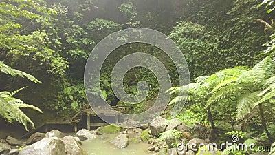 Den gröna tropiska skogen och steniga floden som flödar på, vaggar surrsikt Flodström i rainforest och gammal trappa wild lager videofilmer