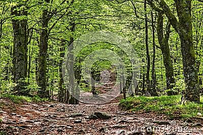 Vandringsled i en härlig grön skog