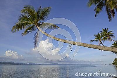Den tropiska paradisökokosnöten gömma i handflatan