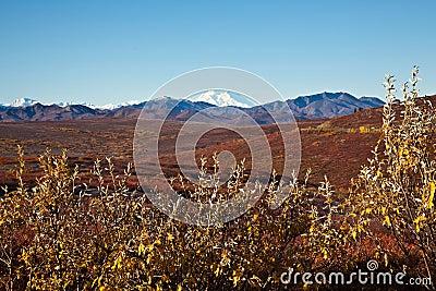 Denali in Autumn