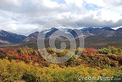 Denali National Park Fall