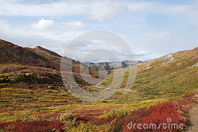 Denali National Park Fall