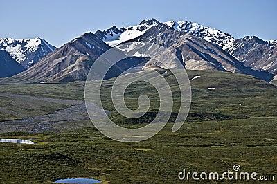 Denali Tundra