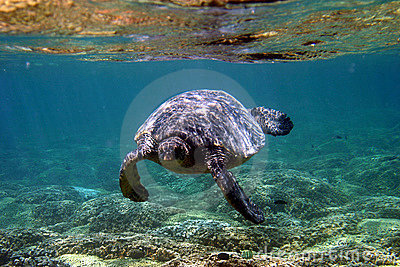 Denny   pod wodą