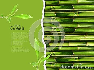 Dense bamboo stalk