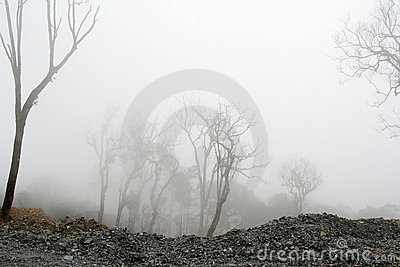 Dense fog at the desolated forest