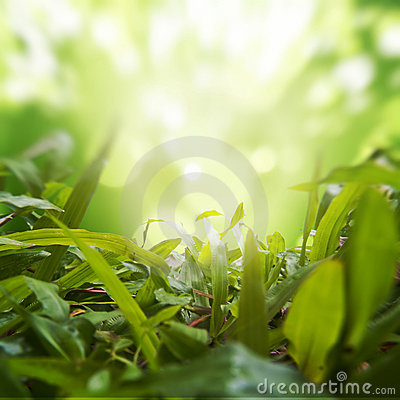 Dense Grasses with Green Nature Background