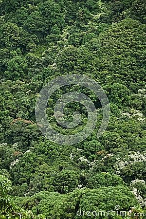 Dense jungle hillside