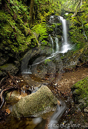 Dense Lush Forest and Waterfall