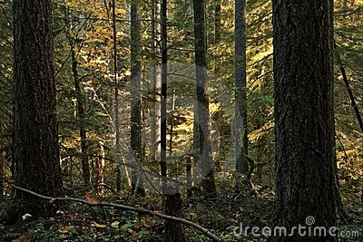 Dense trees along a forested hiking trail