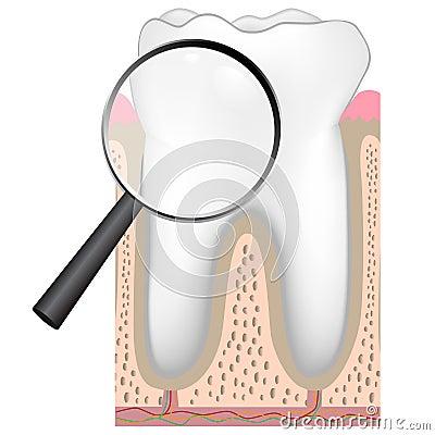 Dental checkup, eps8