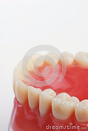 Dentist sample teeth