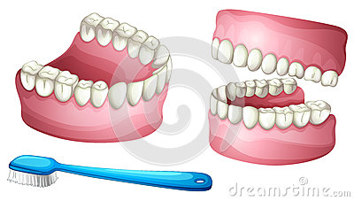 Denture and tooth brush