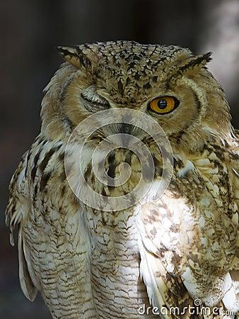 Depredador con alas