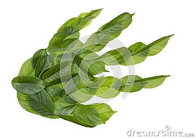 Depredador verde de la pata