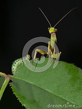 Depredador y presa cara a cara
