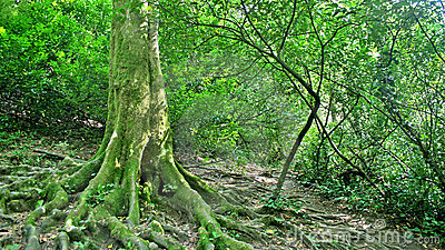 Depths of forest