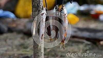 Der Fisch wird durch das Feuer getrocknet stock video