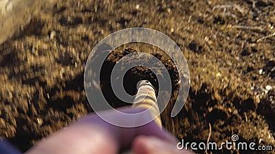 Der Gärtner setzt Humus in die Schubkarre ein stock footage
