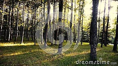 Der schöne Park bei Sonnenuntergang stock video footage