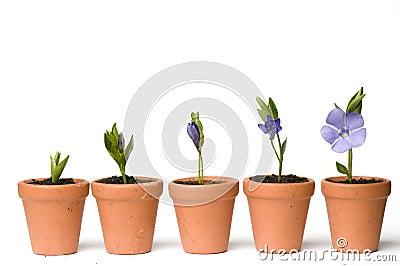 Desarrollo de la flor