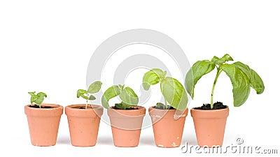 Desarrollo de las plantas de semillero